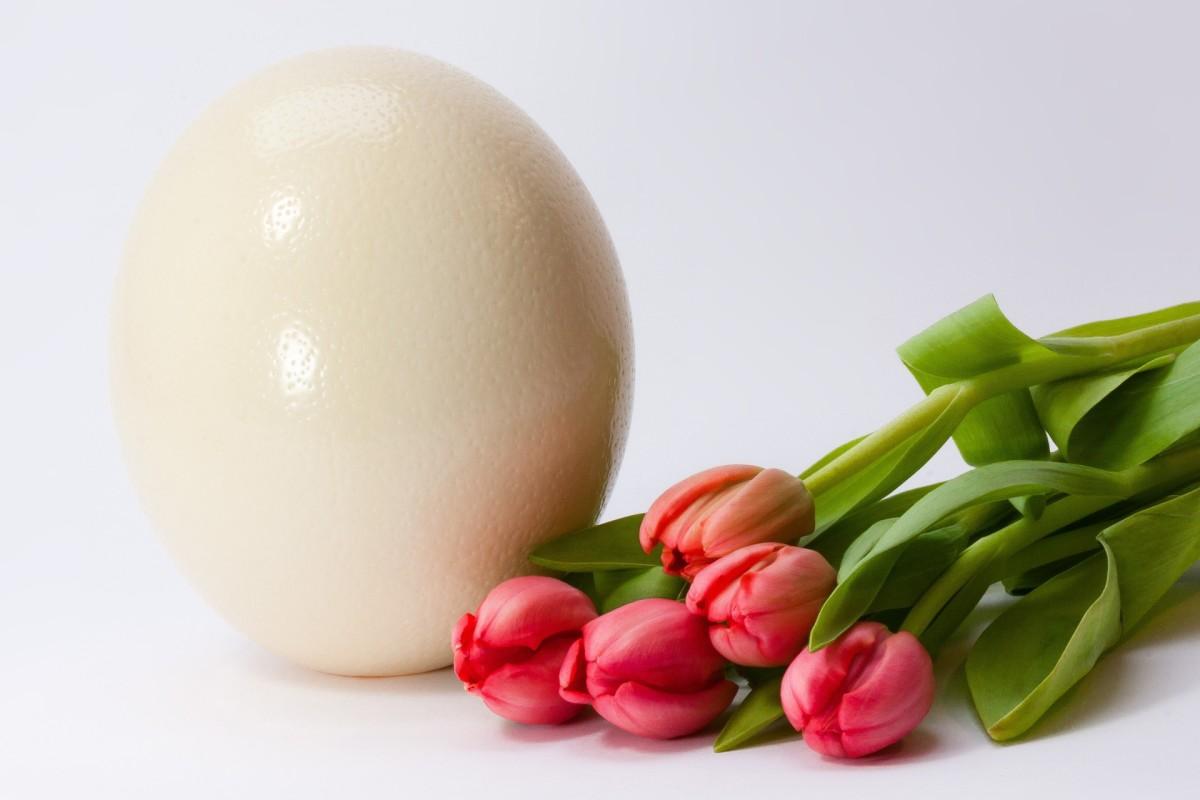 egg-644431_1920