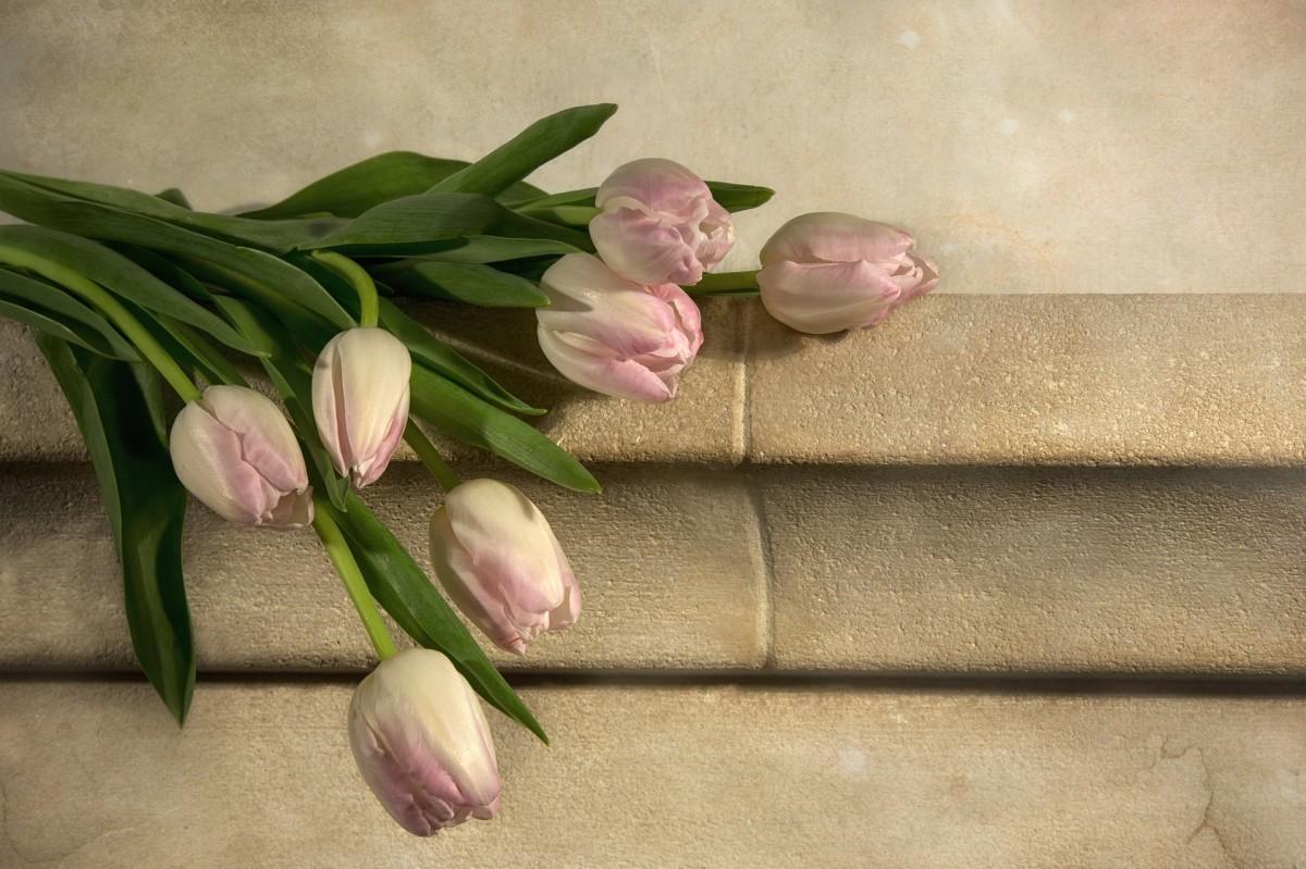 tulips-1139133_1920