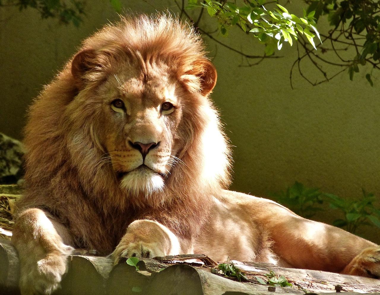 Löwezeit